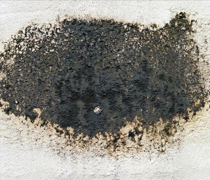 Image of black mold growing on white wall.